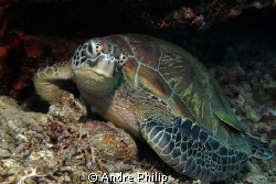 turtle - a really beauty by Andre Philip 